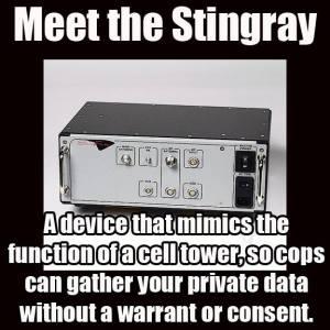 stingray-2
