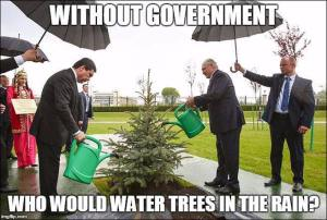 pollies watering trees in the rain