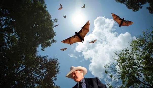 katter-bats