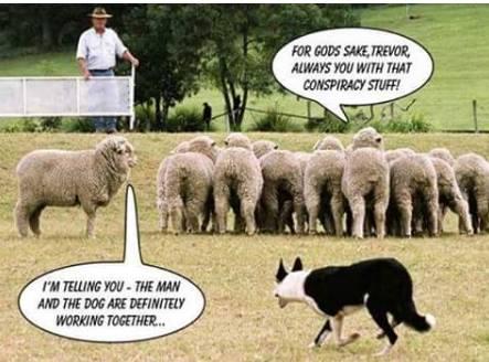 conspiracy-theory-sheepdog
